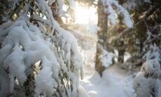 Не только для снеговиков: как правильно использовать снег в саду