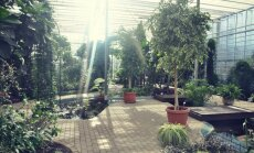Fotopastaiga Salaspils botāniskajā dārzā: ārā ziema, oranžērijā – mūžīgā vasara