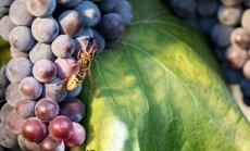 Советы, как уберечь себя от укусов насекомых