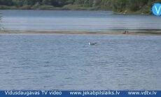 Video: Jēkabpilī Radžu ūdenskrātuvē mirst ūdensputni