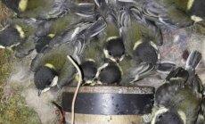 ФОТО ОЧЕВИДЦА: В старой колонке поселились синички с птенцами