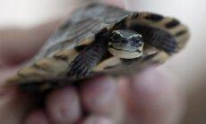 Jaunietis sašauj retu bruņurupuci un ar tā foto lepojas 'Facebook'