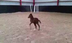 ЗАБАВНОЕ ВИДЕО: Мама-лошадь пытается усмирить непослушного жеребенка