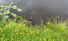 Piemājas dīķī Kazdangā noslīkst makšķernieks