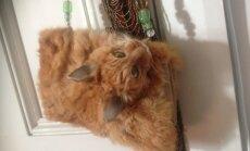 Foto: Interneta izsolē piedāvā somiņu no īsta kaķa