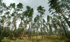 Во многих лесах сохраняется высокая пожароопасность