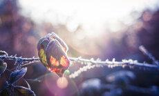 """В Латвии похолодало до -7 градусов, на дорогах возможен """"черный лед"""""""