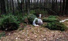 Beberbeķu dabas parkā pamestas neiztirgotās Ziemassvētku eglītes