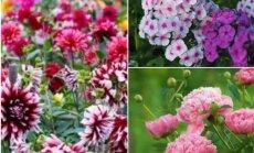 18 растений, без которых невозможен красивый летний сад