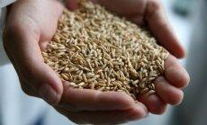 Krievijā kviešu eksports samazināsies par 59%; brīdina par iespējamu graudu eksporta aizliegumu