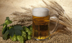 Eiropā spēcīgās lietavas samazinājušas alus miežu ražu