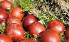 Laikraksts: baltās olas šogad lētākas
