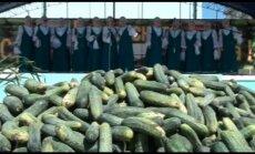 Video: Krievijā aizvadīti jestri gurķu svētki