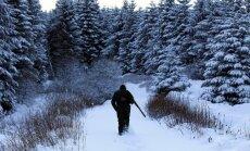 Cūku mēra iegrožošanas vārdā medniekiem varētu maksāt par nošautajām mežacūkām