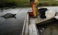Tuvojoties lašveidīgo zivju nārsta laikam, sarosījušies maluzvejnieki