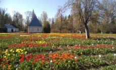 Lietuvas Holande – Burbišķu muiža, kur apskatāmas tūkstošiem ziedošu tulpju