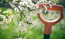Kas darāms dārzā no 7. līdz 14.maijam