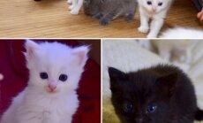 Brangs pulciņš kaķu bērnu meklē savus īstos saimniekus