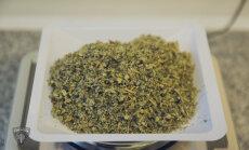 Zemgalē par marihuānas glabāšanu aizturētas vairākas personas