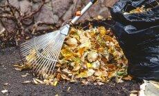 Aktuāli rudens sezonā: ko darīt ar lielajām lapu kaudzēm
