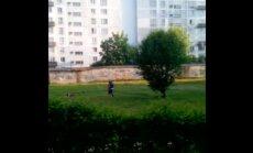ВИДЕО: Жители Пурвциемса боятся выходить во двор - на газоне резвятся бойцовские собаки
