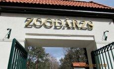 Rīgas Zooloģiskajā dārzā sarūpēti svari lielo zvēru svēršanai
