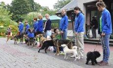 Vairākās Latvijas pilsētās notiks bezmaksas semināri par suņiem-pavadoņiem