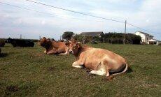Piena cenas turpinās kritumu, vēsta 'de facto'