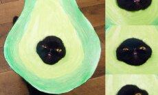 Helovīnam gatava! Kaķenīte Vilova, kuru saimniece ietērpusi kā avokado un maizi