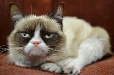 Nīgri, skābi, skumji un dusmīgi – pieci pasaulē slavenākie kaķi