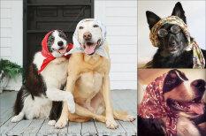 """Собаки в """"babushka"""", настолько милые, что у тебя перехватит дыхание"""