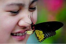 """В Китае открылась """"Долина бабочек"""""""