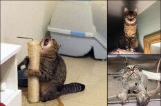 """""""Оскар"""" в студию! 16 фото котиков, которые все слишком драматизируют"""