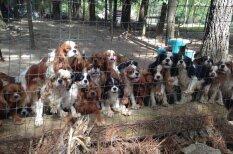 """Операция """"Спасение спаниелей"""": 108 собак были вызволены из рабства в лапах заводчиков"""