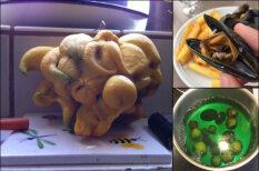 16 ФОТО дикой еды, которые поразят даже тех, кто уже видел в этой жизни все