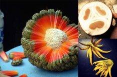 14 экзотических фруктов, о которых ты никогда не слышал