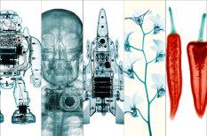Пронзающее искусство: 16 изумительных фотографий, сделанных… рентгеном
