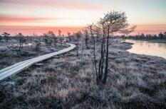 15 neticami skaisti skati no sarmas klātā Ķemeru purva