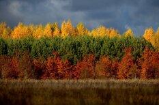 Сама природа показала, почему у Литвы желто-зелено-красный флаг