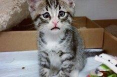 Interneta sensācija: Pasaulē bēdīgākais kaķis