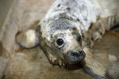 ТЕСТ: Знаешь ли ты, что делать с найденным на берегу моря тюлененком?