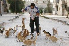 Всегда есть время для добра: мужчина кормит котиков в раздираемом войной городе