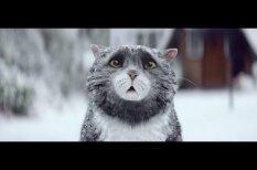 ВИДЕО. Милый котик стал героем очаровательной рождественской рекламы