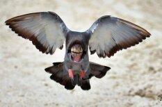 Kā izskatītos putni, ja viņiem būtu lielas mutes un zobi