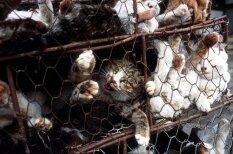 Restorāni Vjetnamā, kuros pasniedz ēdienus no kaķu gaļas