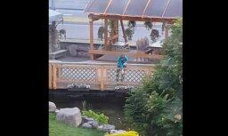 Video: Puisis slepeni makšķerē 'Lido' atpūtas centra dīķī