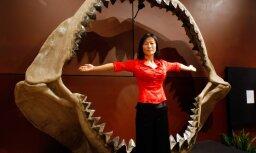 Названа новая причина вымирания гигантских предков акул