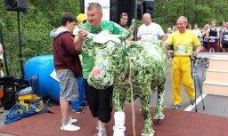 Ventspils pusmaratons: 1161 skrējējs un viena zaļā govs