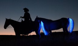 Jauns izgudrojums – tumsā spīdošas zirgu astes