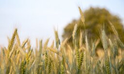 Rosinās Krīzes vadības padomi izskatīt pašvaldību lūgumu par ārkārtas situācijas izsludināšanu lauksaimniecībā